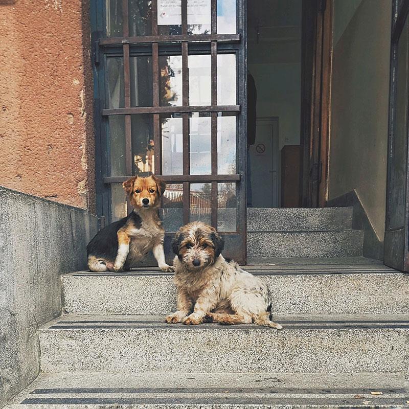dva kučeta sede na stepenicama
