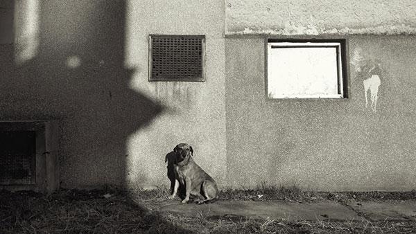 pas na ulici