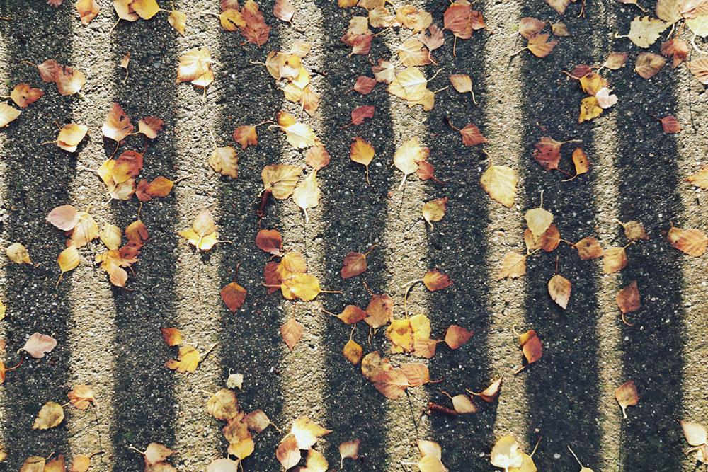 opalo lišće