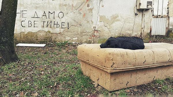 pas leži na odbačenom krevetu a ispred zida na kome piše Ne damo svetinje!