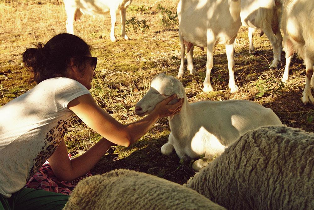 žena mazi jagnje