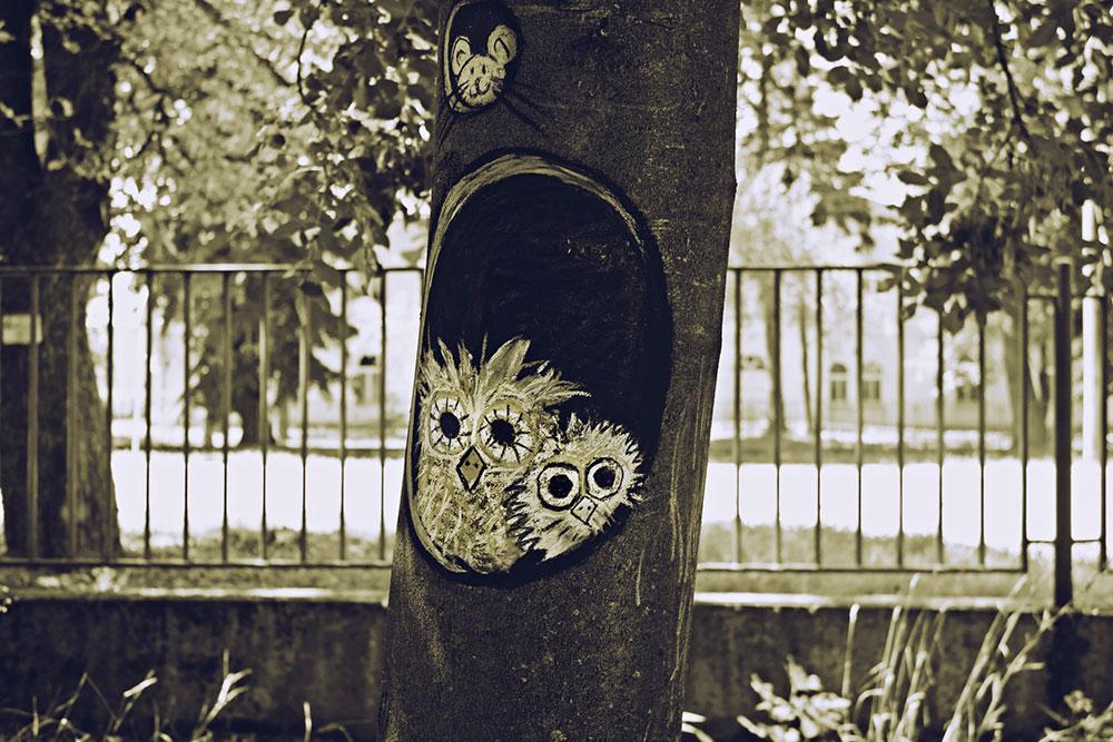 dve sove nacrtane na drvetu