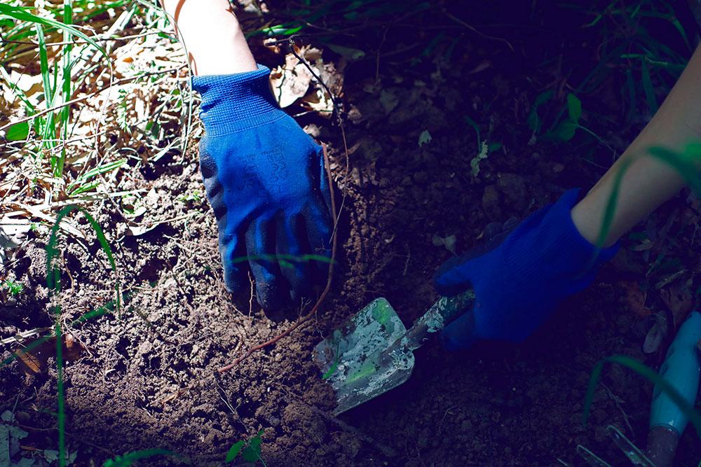 ruke u baštenskim rukavicama koje kopaju zemlju