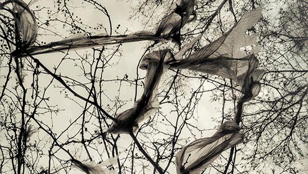 kese na drveću