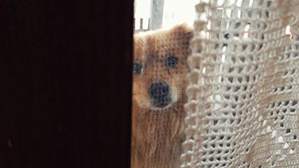 mali pas viri kroz prozor