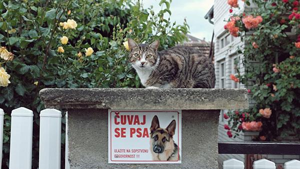 Tabla: Čuvaj se psa