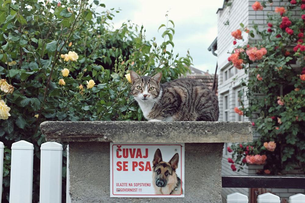 Tabla na kojoj piše: Čuvaj se psa, a iznad koje stoji mačka