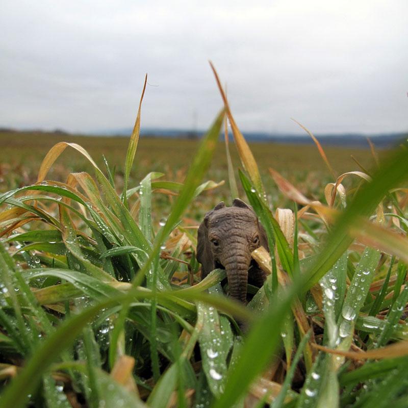 igračka slon u travi