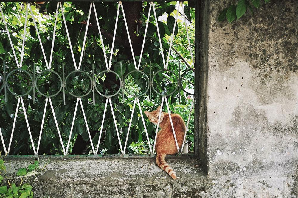 mačka na zidu