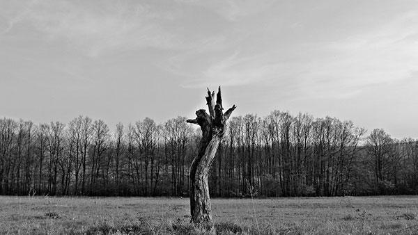 crno-bela fotografija suvog drveta