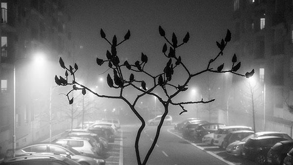 ulica u magli