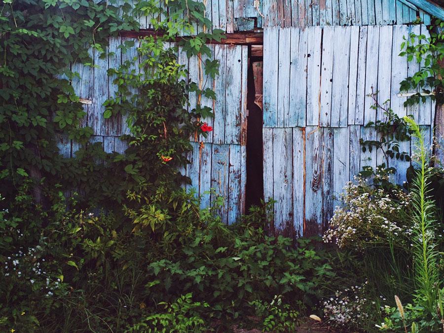 taraba zarasla u korov