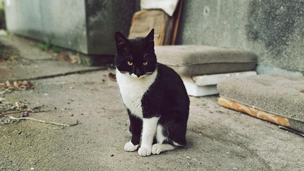 crno-beli mačor